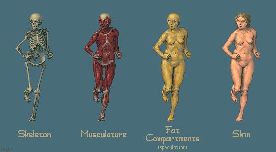 Anatomy Practice @ PixelJoint.com